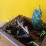 Mini jardin3